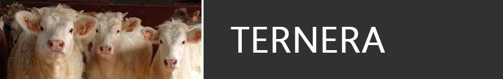 Ternera de Navarra - Carnicería Yerro en Pamplona